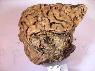 Scientists are amazed that a human brain could persist for 2,600 years.