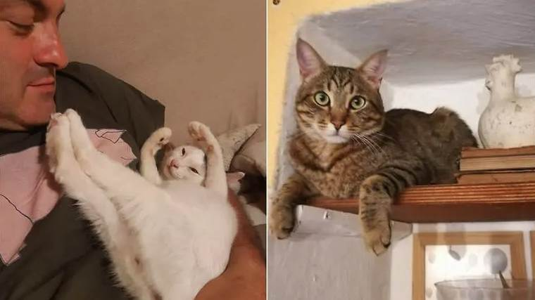IN ITALY, CATS SAVED SPOUSES FROM A LANDSLIDE