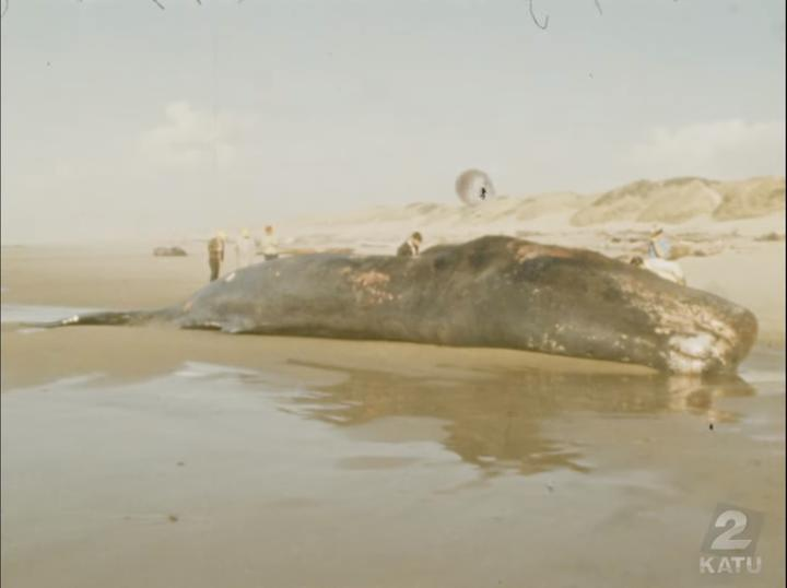 Let's blow up the sperm whale carcass.