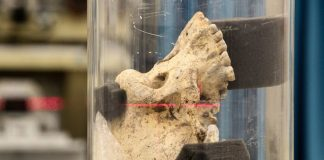 Scientists have found a discrepancy with the traditional theory of human evolution